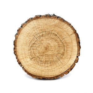 captureandcompose. Large circular piece of wood cross section with tree ring texture pattern and cracks isolated on whitebackground. Detailed organic surface from nature. Digitalbild. www.shutterstock.de; Stockfotonummer 584004901. Web 18. Juli 2017.
